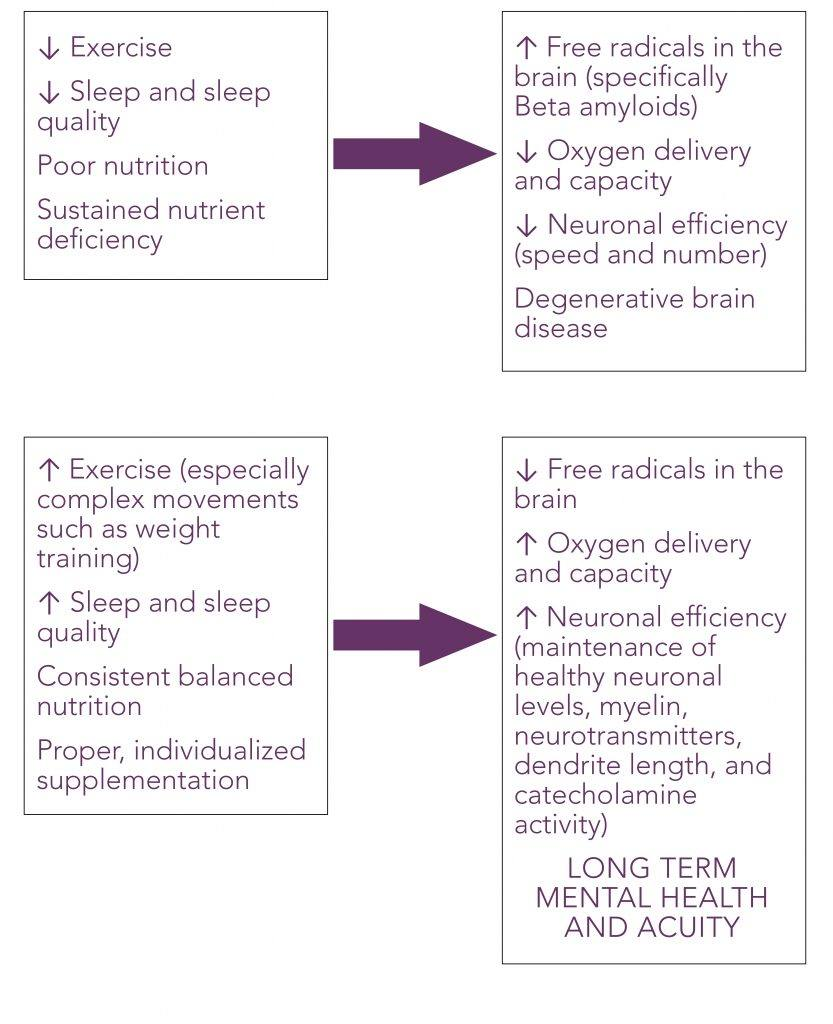 Chart explaining how internal and external factor such as sleep, exercise and stress can positively or negatively impact mental acuity